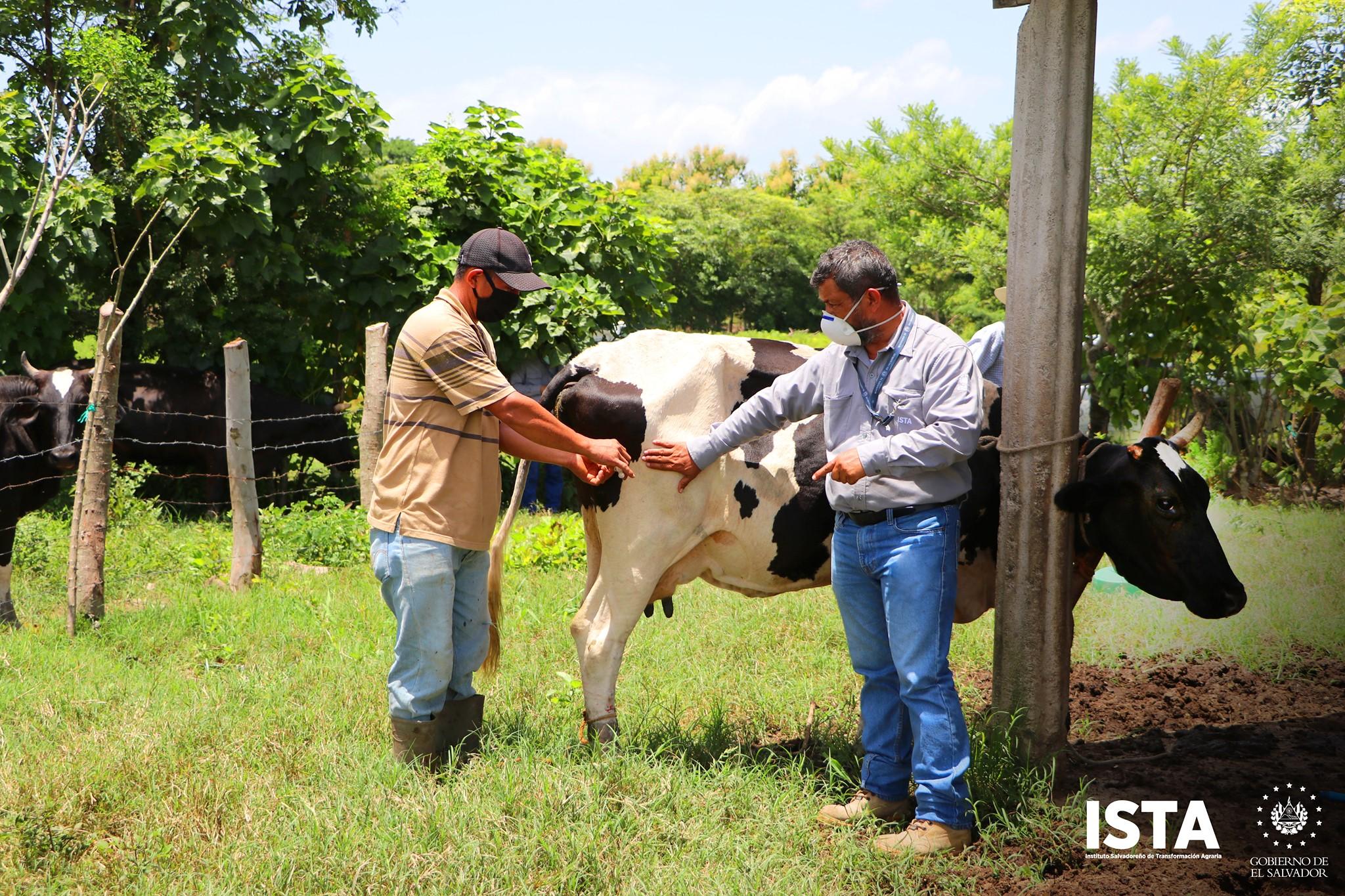 Desarrollamos jornadas de aplicación desparasitantes para ganado bovino