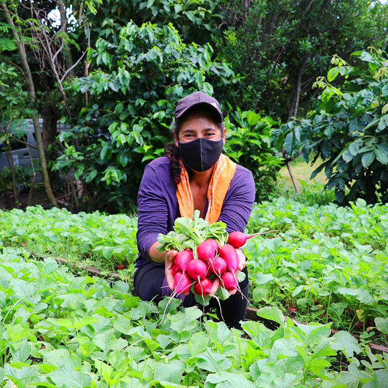 Primeros frutos de huertos diversificados en la Cooperativa Las Lajas, en Sonsonate